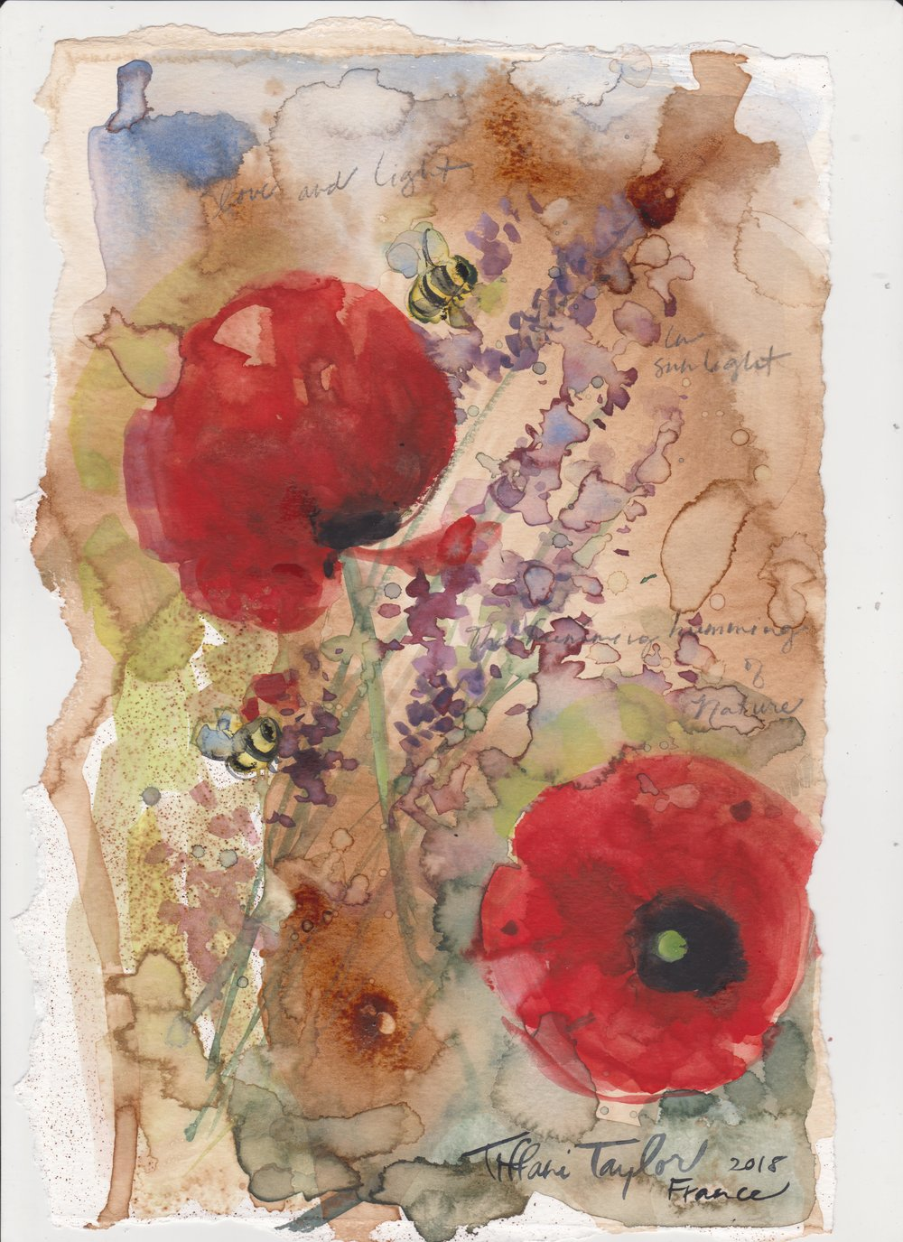 Poppies, Bees, and Lavender en Provence...