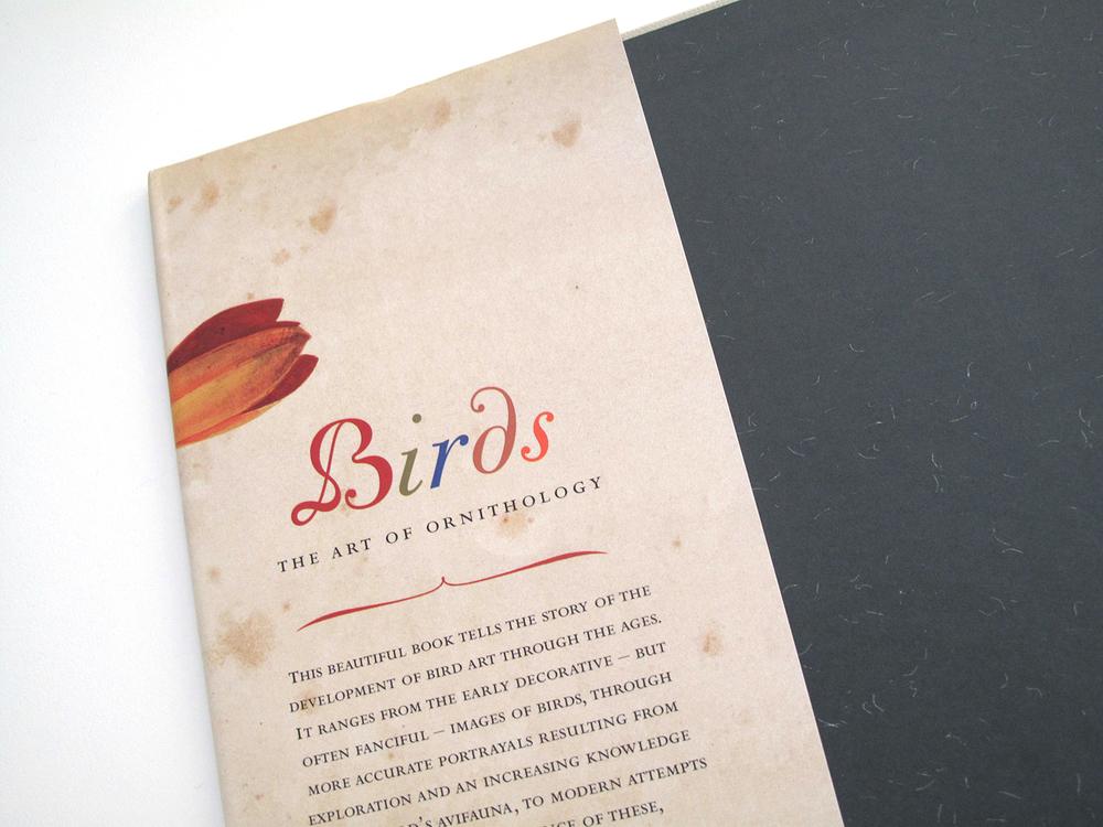sqsp_birdsNHM_02.jpg