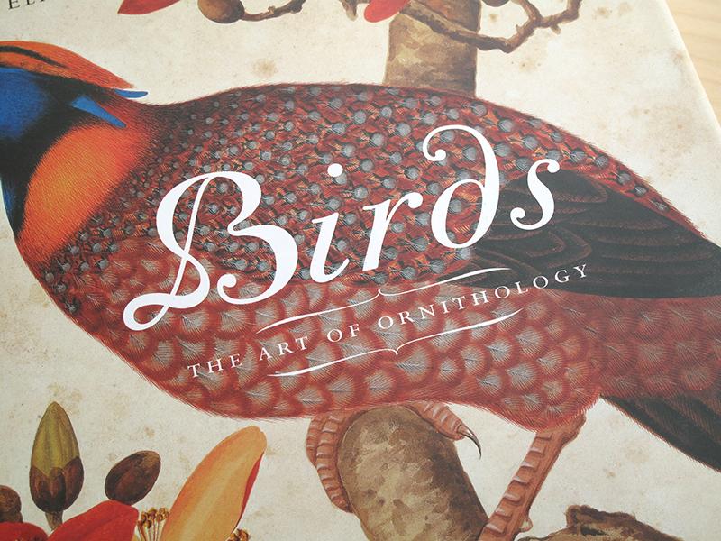 sqsp_birds_05.jpg