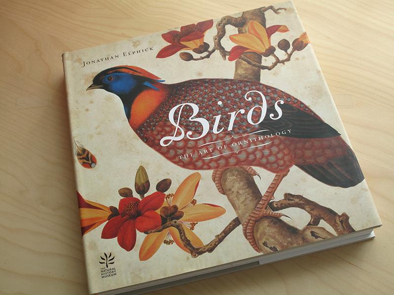 sqsp_birds_08.jpg