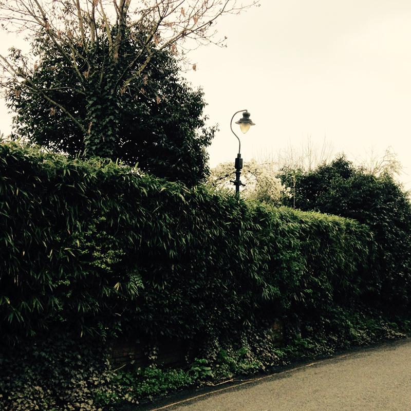 sqsp_blog_spring7.jpg