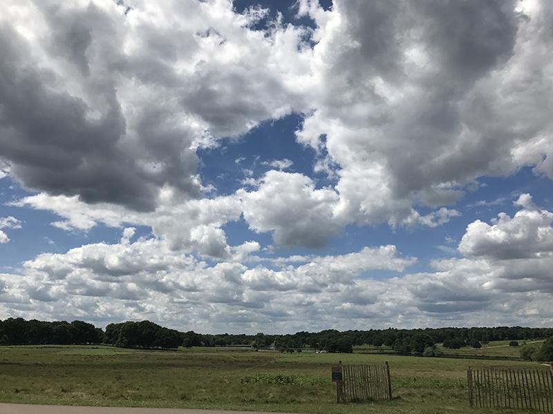 park sky