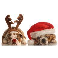 christmas+dogs.jpg