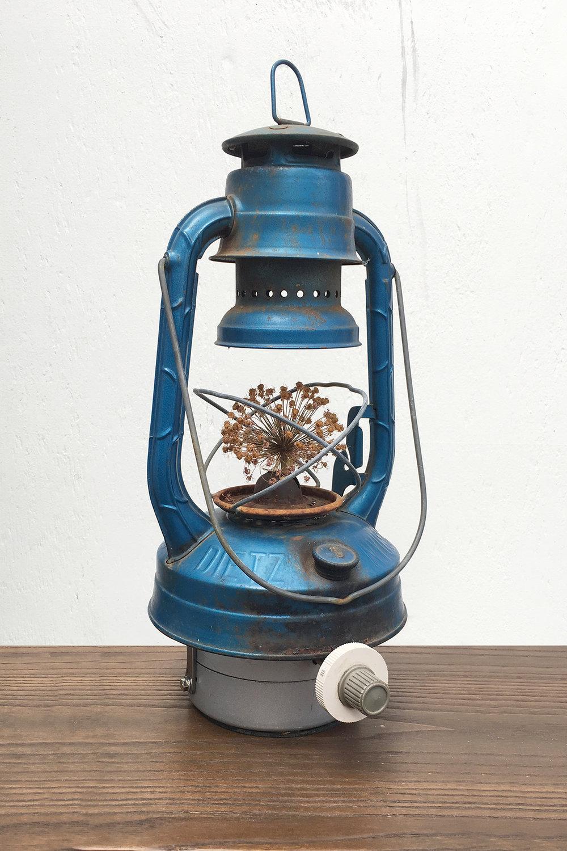 """Lantern Allium, 8"""" x 10"""" x 16"""""""