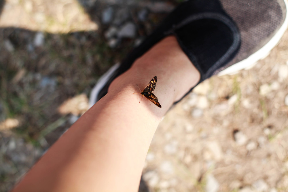This butterfly loved me and wouldn't leave my side