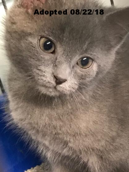 Brownie - Adopted 8/22/18