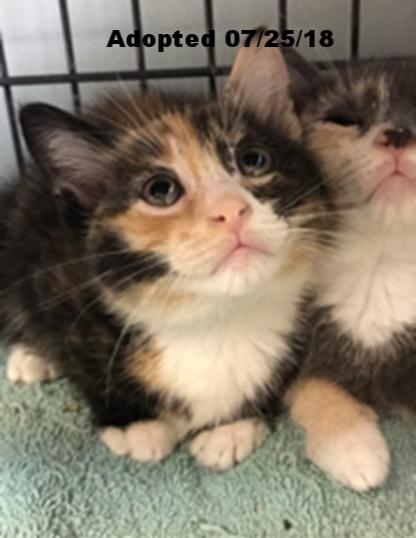 Azalea - Adopted 7/28/18