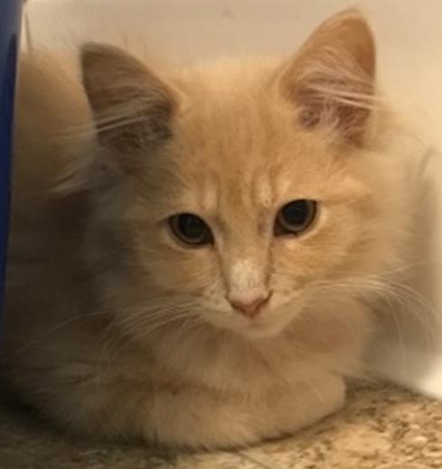 Cruz - Adopted 3/26/18