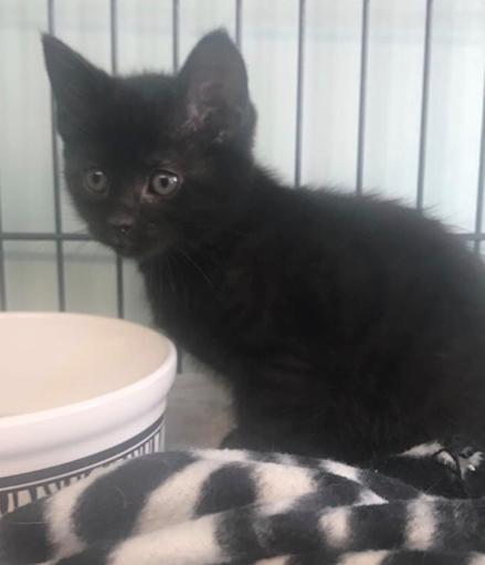 Kali - Adopted 7/23/18