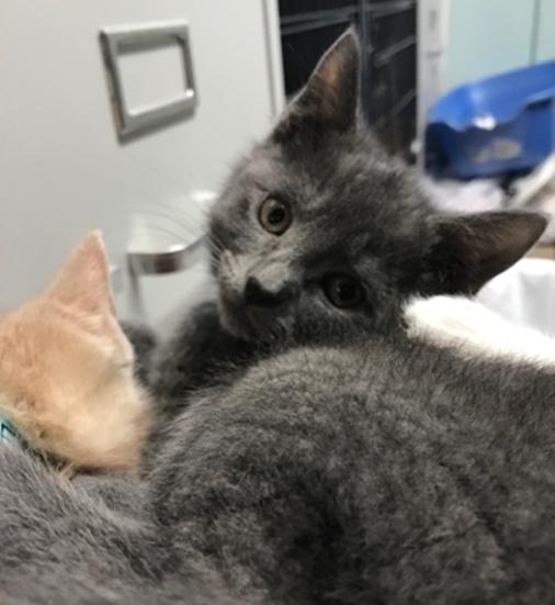 Keiran - Adopted 5/22/18