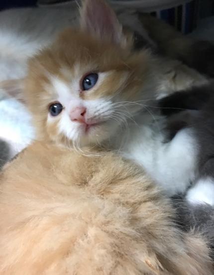 Sage - Adopted 6/26/18