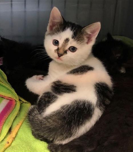 Ser- Adopted 4/16/18