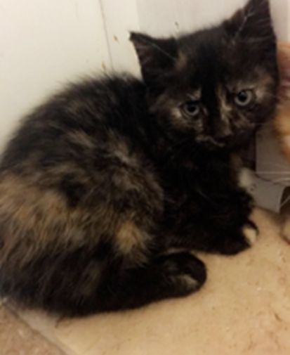 Twilight -  Adopted 6/11/18