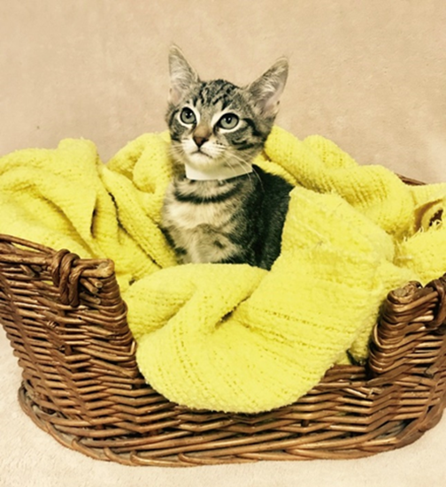French Fry - Adopted 2/4/19!