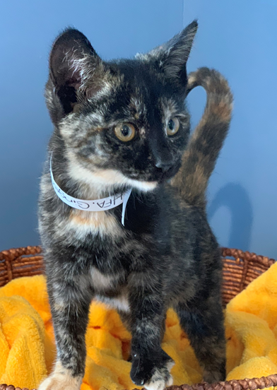 Ginger - Adopted 2/11/19!