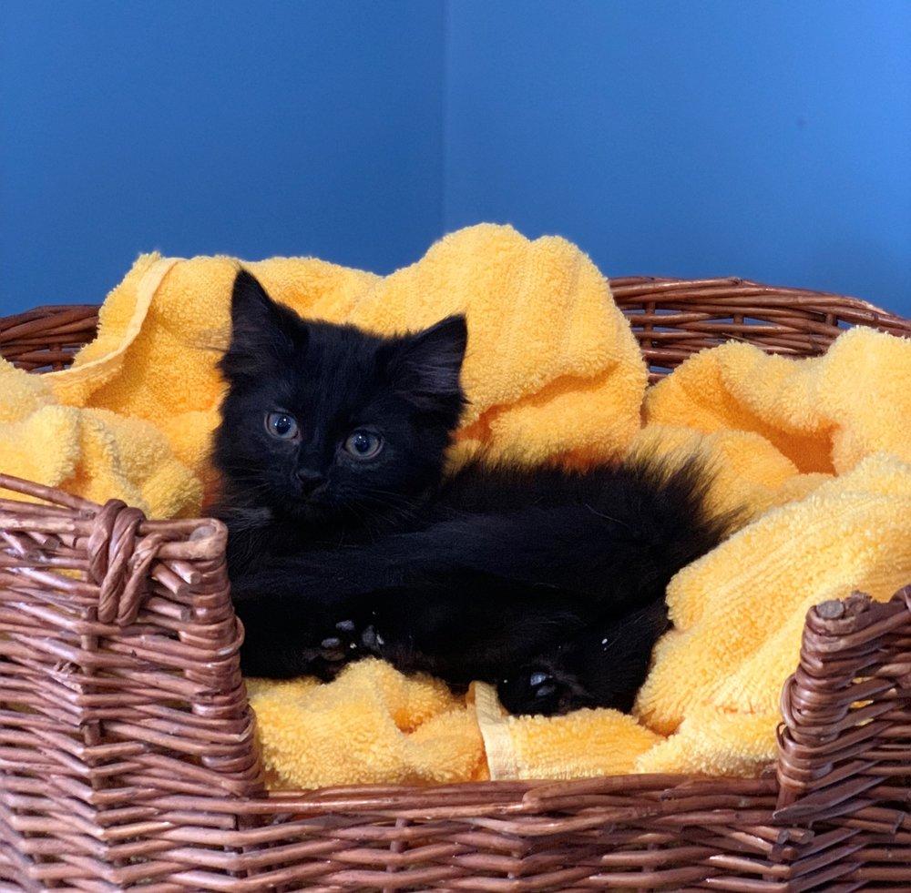 Perdita - Adopted 2/21/19!