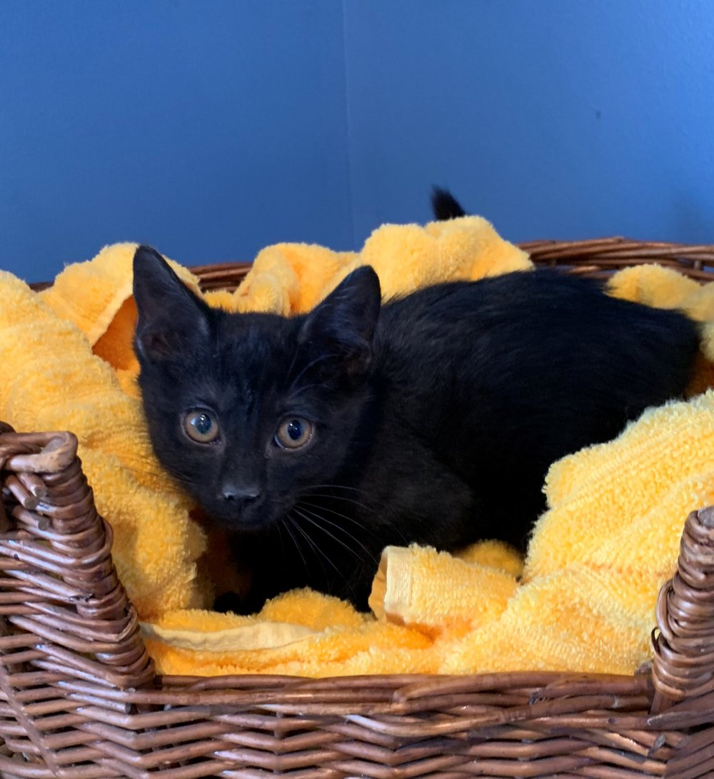 Eliza - Adopted 2/28/19!