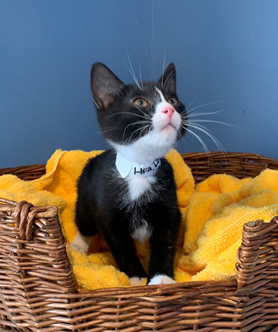 Donnie - Adopted 4/4/19!