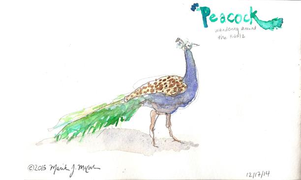 web_Israel_sktchbk3a_peacock.jpg