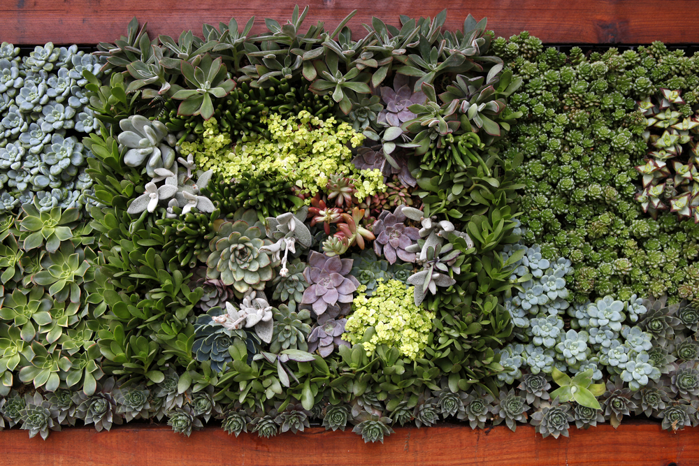 Singing gardens blog vertical garden for Jardin floral