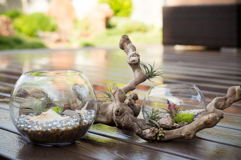 terrarium-container-idea.jpg