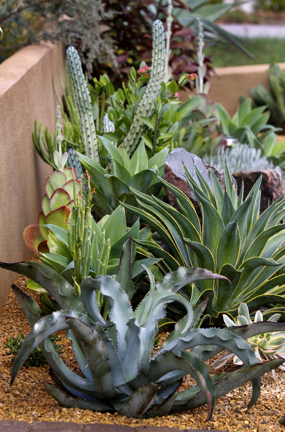 Singing gardens san diego 39 s landscape and garden designer for Garden design with succulents