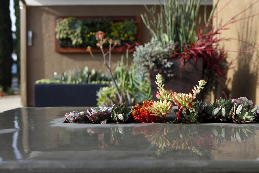 Succulent Garden Design Images - how to design a succulent garden