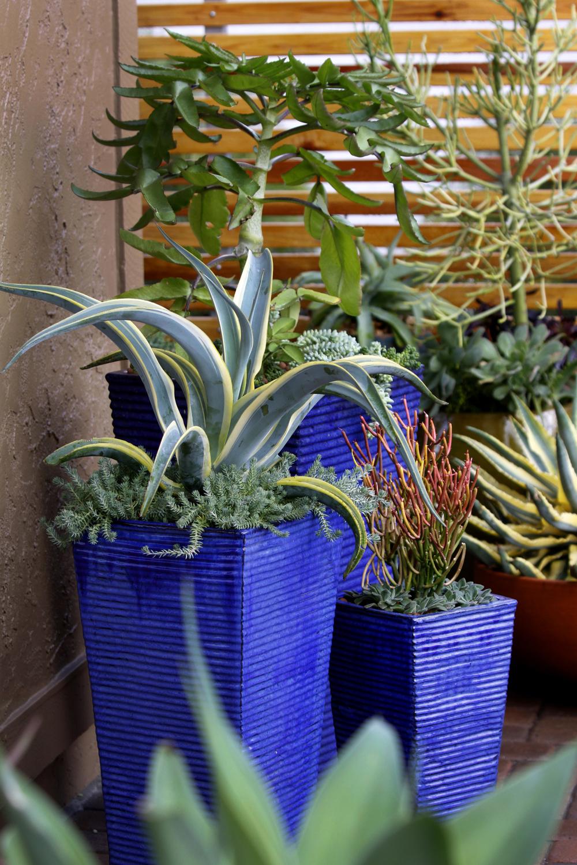 Singing Gardens San Diego S Landscape And Garden Designer
