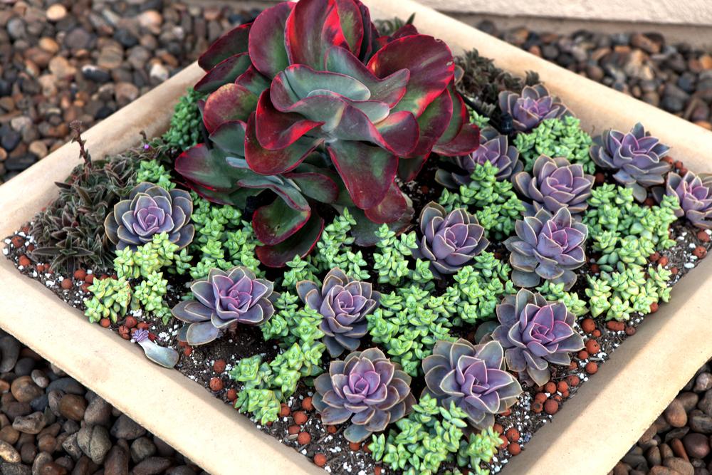 Succulent Garden Design images