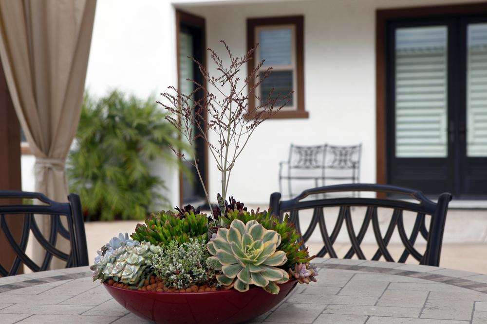 Singing Gardens Blog Dish Garden Design Ideas