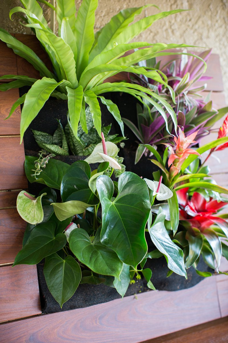 vertical-gardening-idea-tropical-garden.jpg