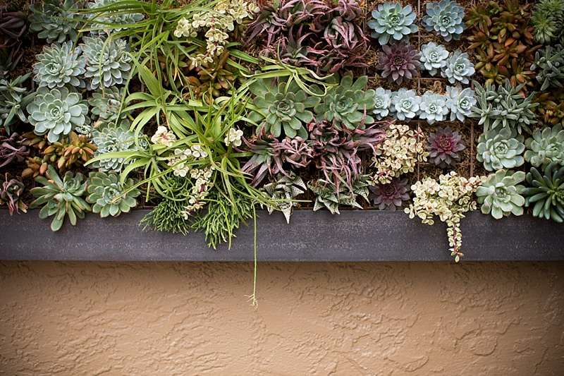 Charmant Succulent Vertical Living Wall Art By Singing Gardens