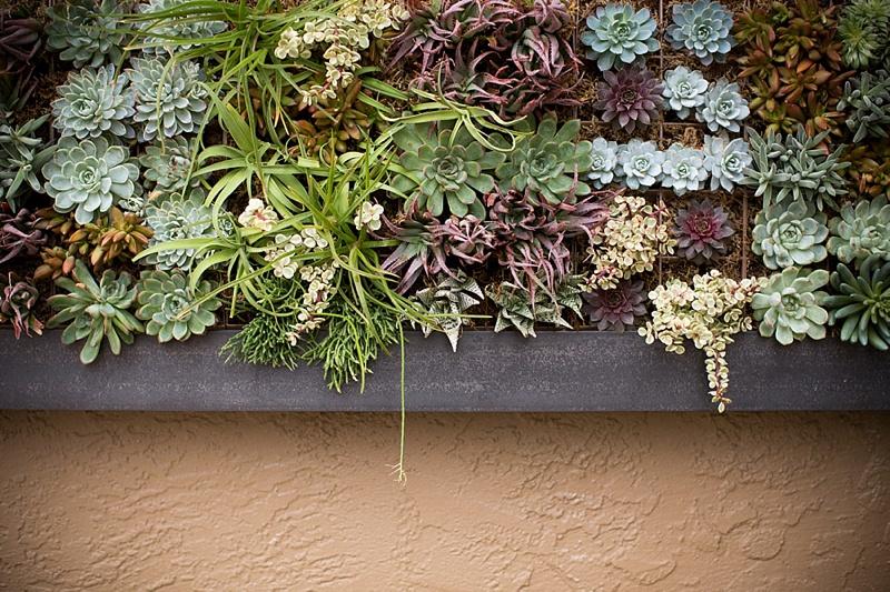 succulent-vertical-living-wall-art-by-singing-gardens-designer.jpg
