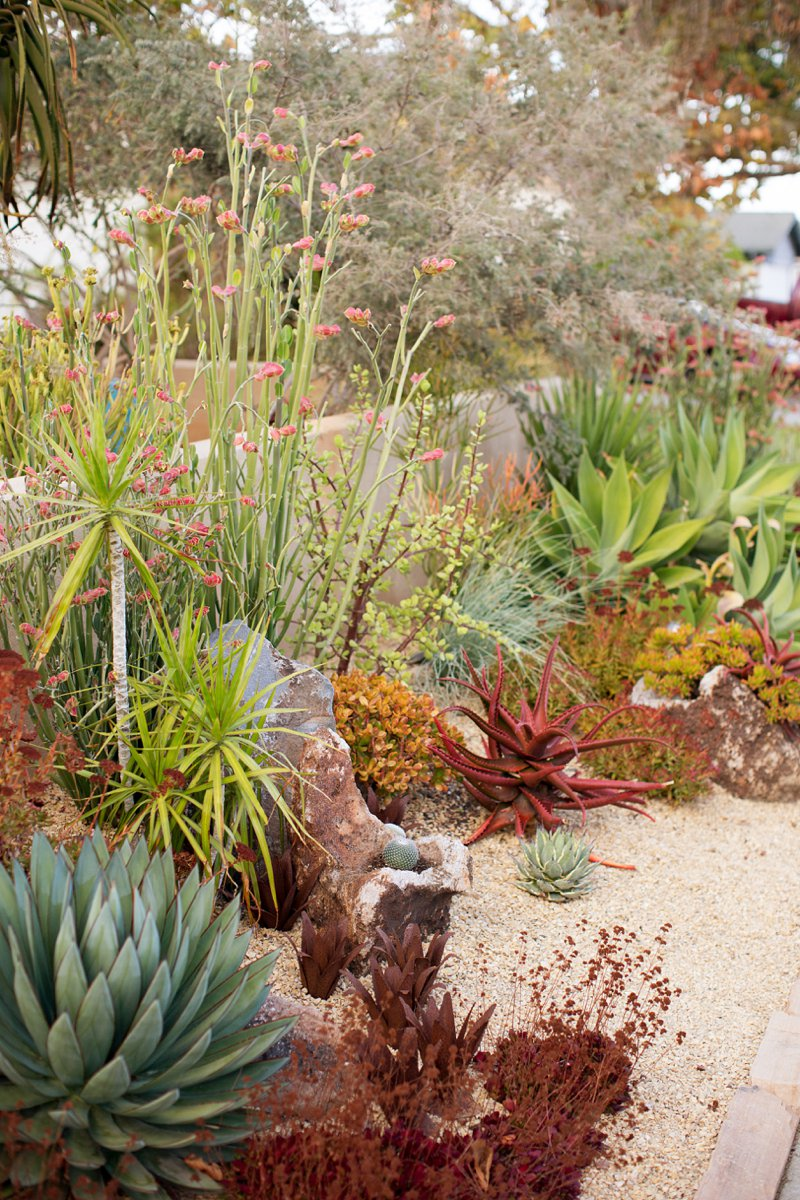Rush Green Succulent Front Yard Landscaping