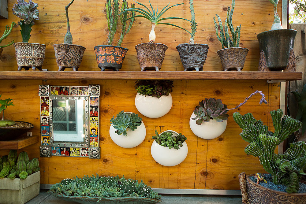 rare and collectable succulent display idea.jpg