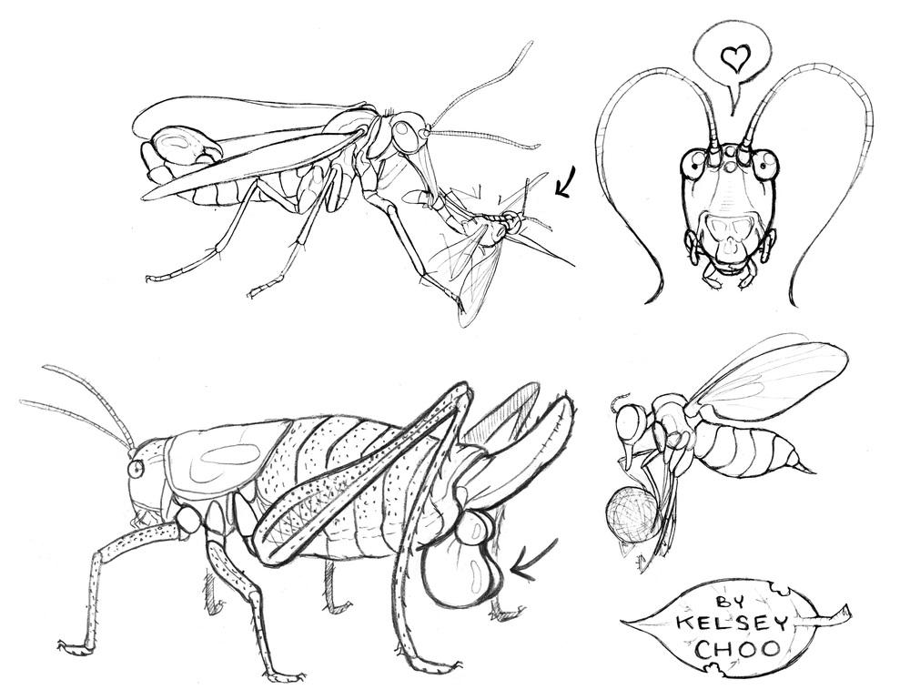 insect zine.jpg
