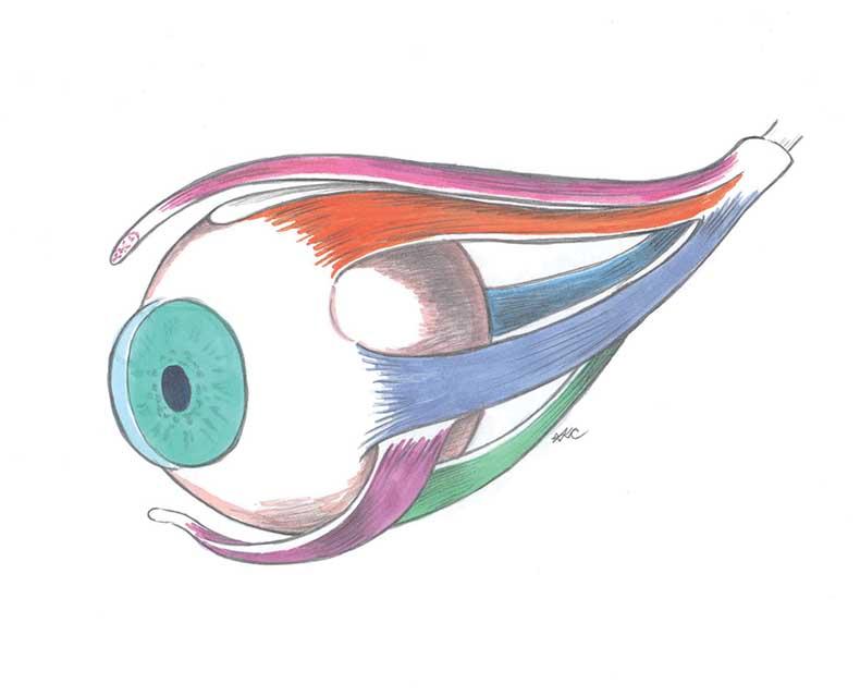 eye 1clean copy.jpg