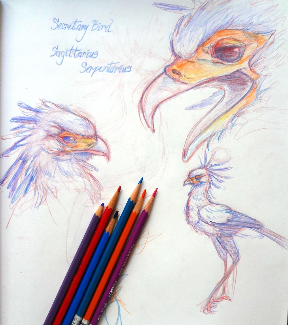 secretary+bird.jpg
