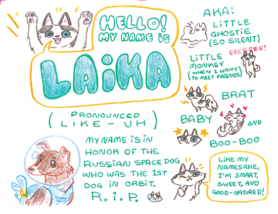 LaikaAboutMe copy 3.jpg