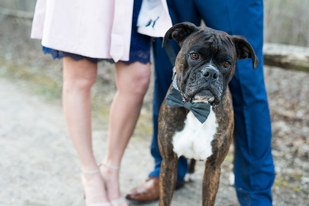 Meet Bo with his Bow Tie <3,  Brett Loves Elle Photography