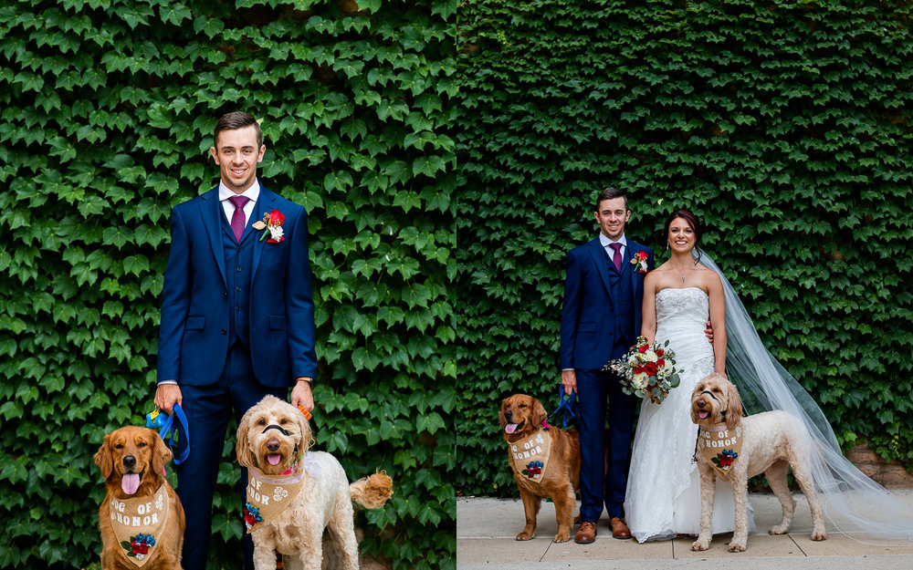Bride and Groom Portrait with thier Dogs By Brett Loves Elle Photography, Columbus Wedding Photographers, Ohio Wedding Photography