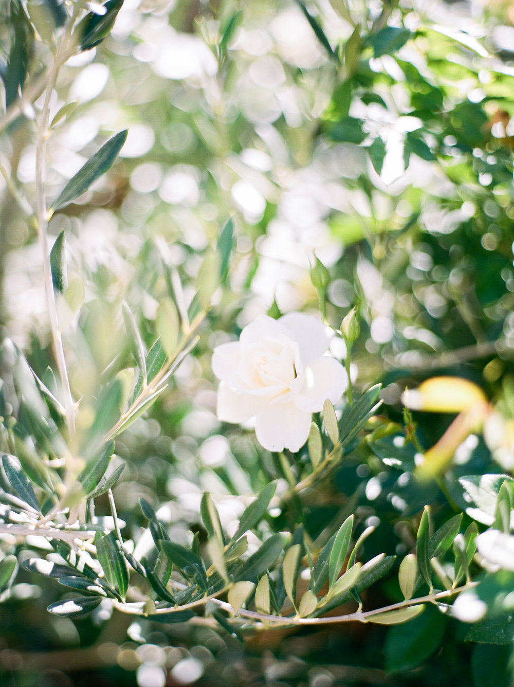 Steve Torres Photography Santa Margarita Ranch Wedding-12.jpg