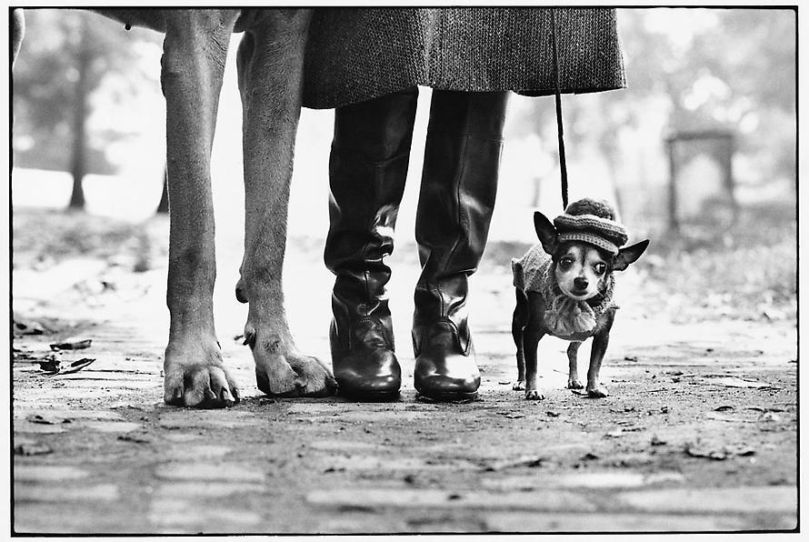 I miss my New York dog walking. Oh so very very much.    New York City — Elliott Erwitt, 1974.    Le sigh.
