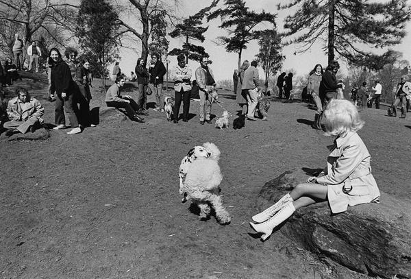 Vintage New York City dog park.