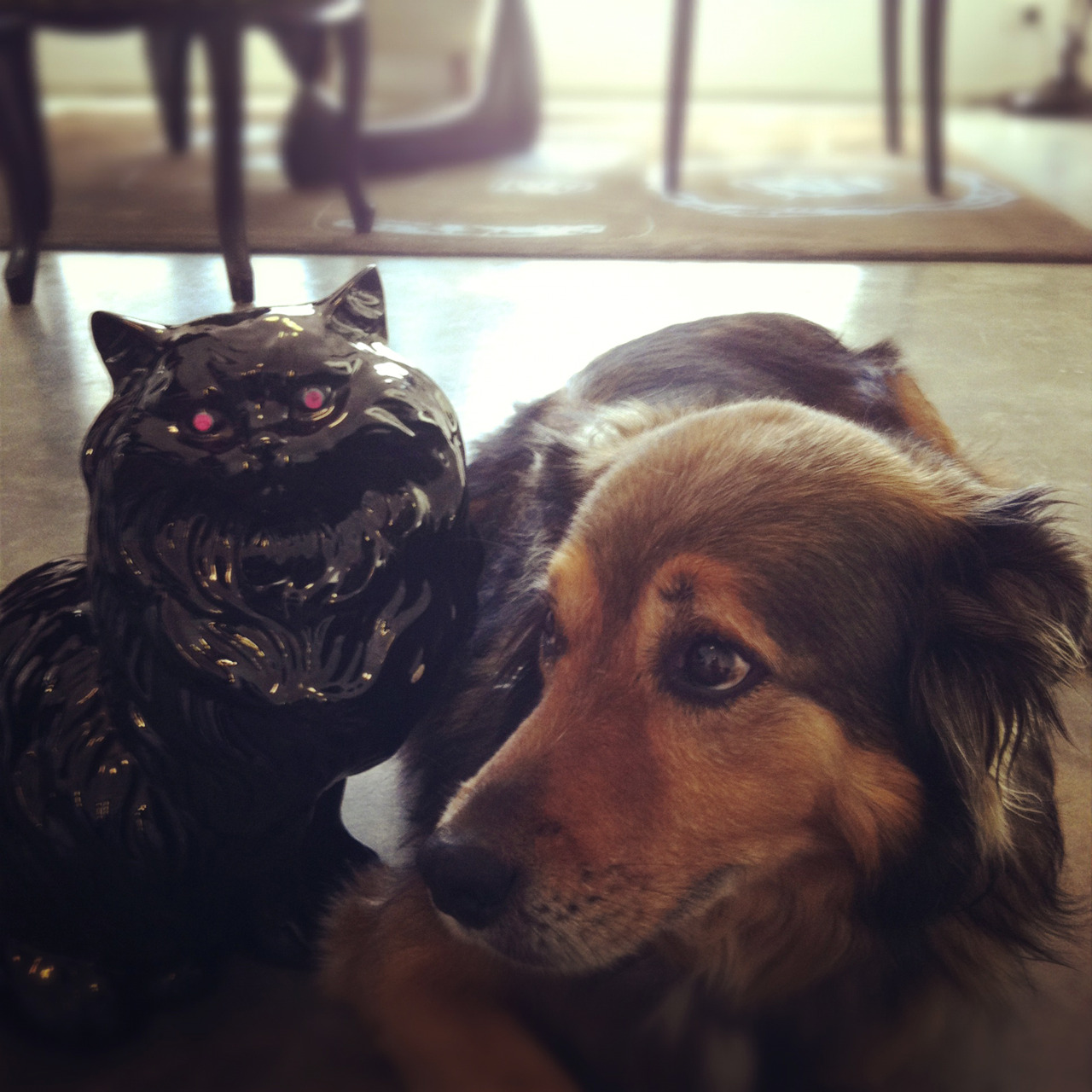 Lucca (our dog at work) looks so out of sorts with that black monstrosity sitting next to her.