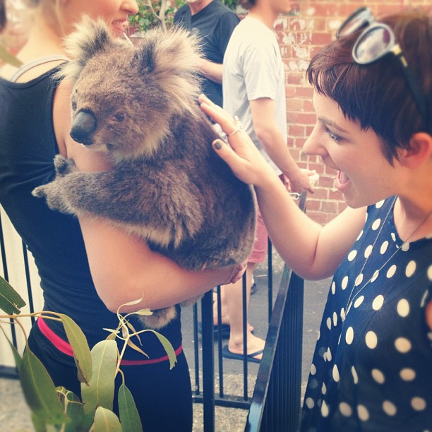 For as long as I have loved koalas, I had never met one UNTIL TODAY!! So happy right now 🐨💛 #love #koala