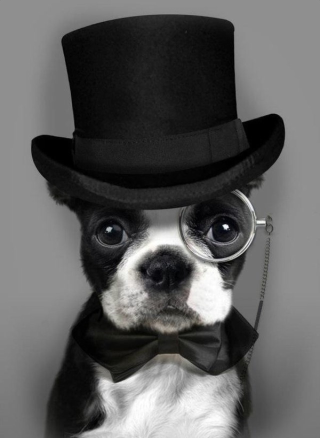 Sophisticated Dog is Sophisticated