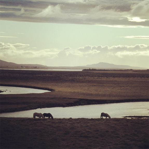 Photos of Iceland by Sean Pecknold. I'm not big on horses, but this sure is pretty. (Pic found via  The Fox Is Black )