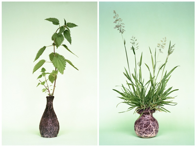 These with a self-contained root vase (via  More Design Please ) are so beautiful.