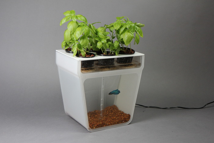 Home Aquaponics Kit: Self-Cleaning Fish Tank That Grows Food